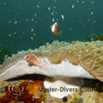 Anemone and fishies...