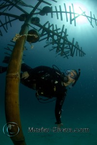 A Diver Swims Beneath the 'Coconut Monkey Tree'