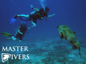 Pufferfish and Divers