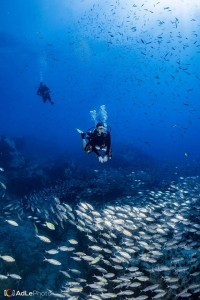Fun diving at Chumphon Pinnacle