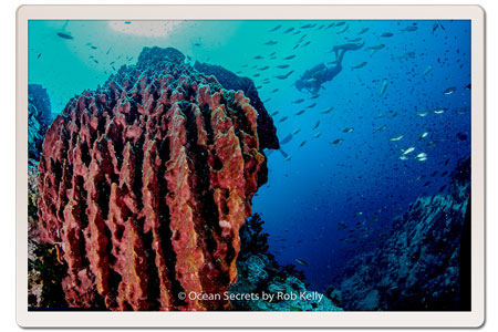 Barrel Sponge at Chumphon Dive site, Koh Tao, Thailand