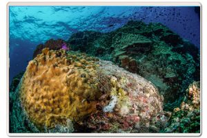 white-rock-corals-and-nudi