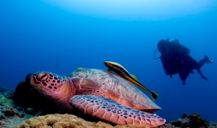 Diving with Turtle