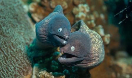 Master Divers | Eels of Koh Ta...